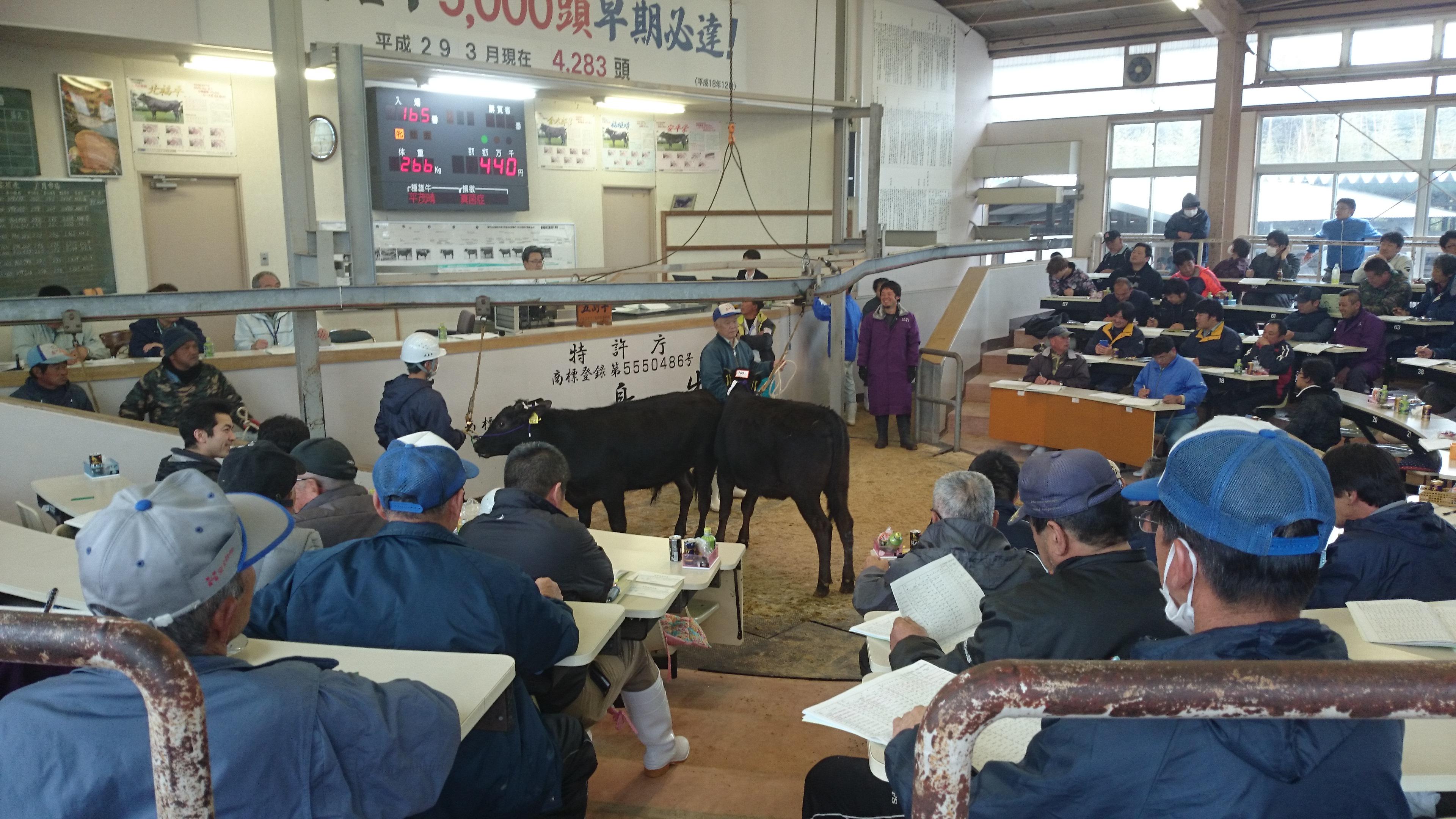 【五島牛】子牛の競りでバイトした話